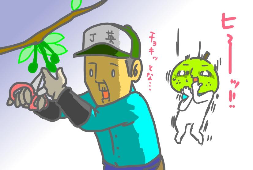 2016年摘果作業
